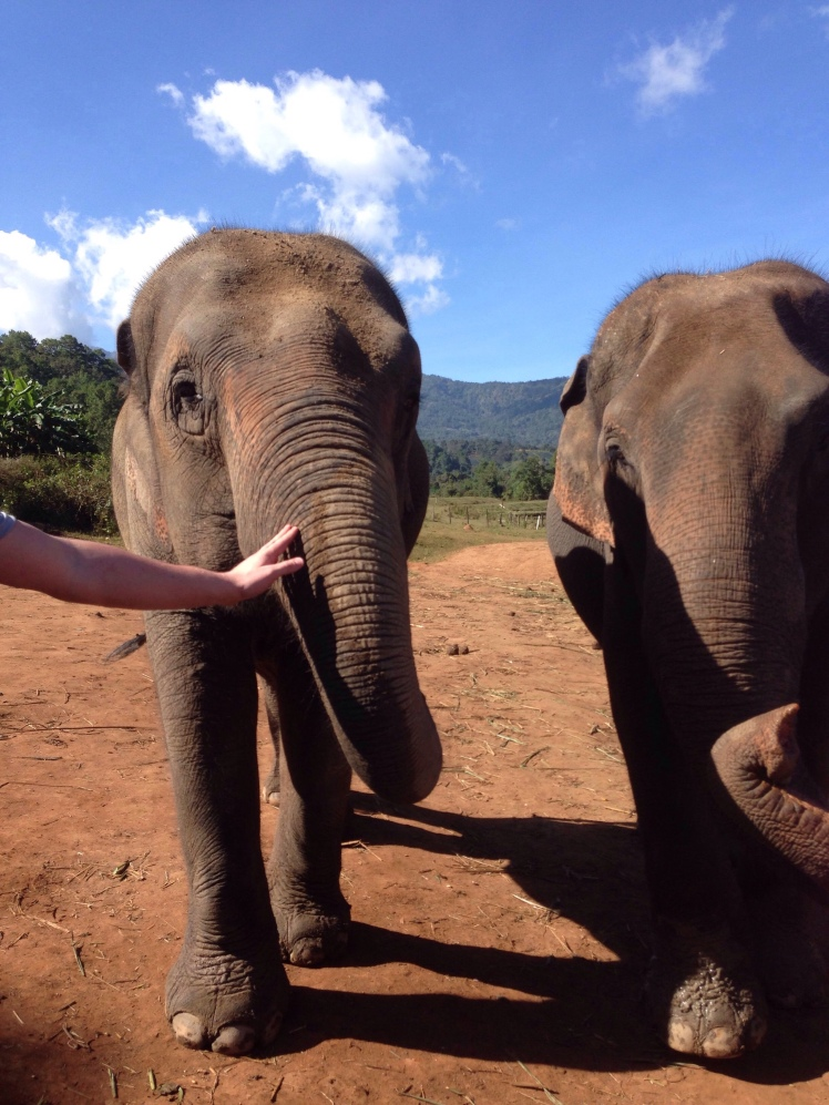 Thailand Chiang Mai elephant sanctuary Dumbo Elephant Spa