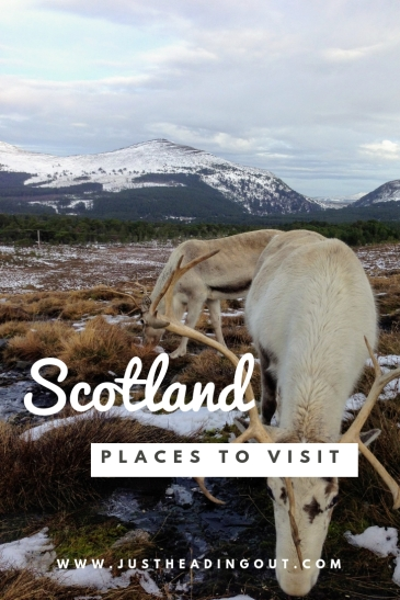 Places to visit in Scotland beautiful Cairngorms reindeer