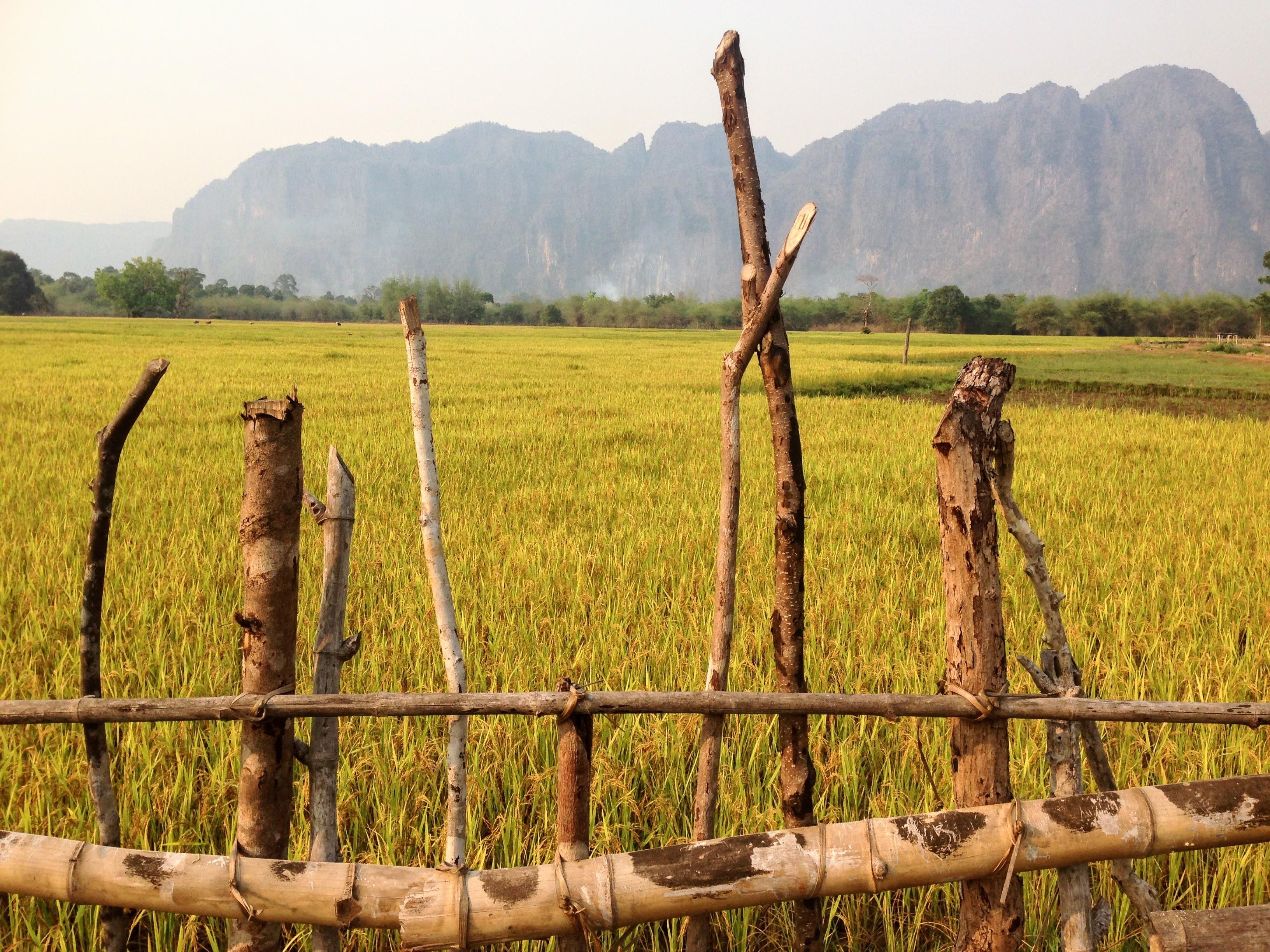 ricefields rice paddies mountain laos thakhek motorbike loop