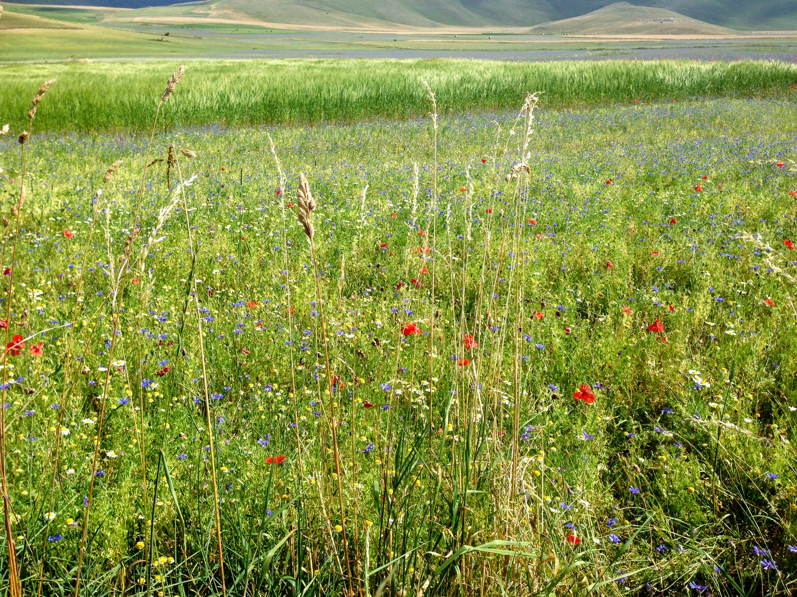 Castellucio di Norcia Umbria Italy lentil fields