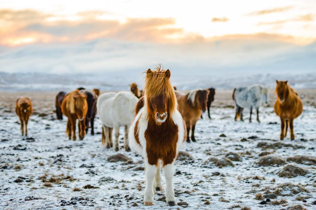 Iceland trip travel bucket list northern lights icelandic ponies