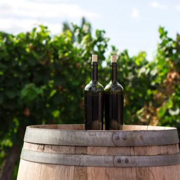 wine bottles barrel vineyard wine travel movie